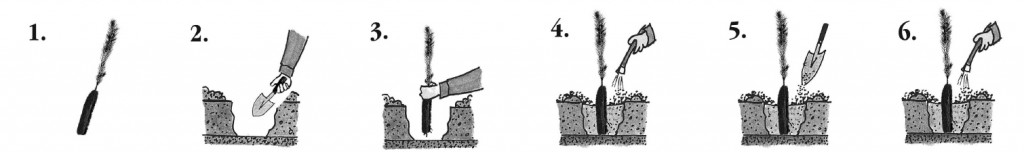 fidan-dikimi-1024x152